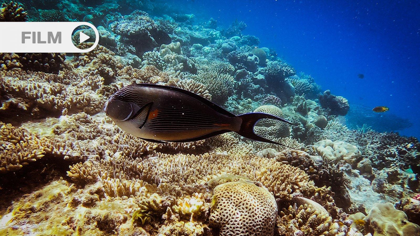 Rafy Koralowe Morza Czerwonego